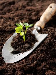 garden soil testing